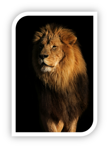 Lion Framed e1454082570732 - The Longing of your Heart ~ Brian